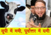 owaisi and cow