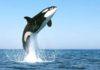 Whale Fish bounce air