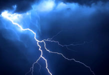 350 cattle die due to fall Lightning