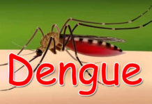 Dengue Prevention and Control in Almora
