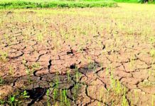 Drought conditions in some areas of Kumaon